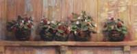 Framed Strawberries in Pots
