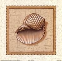 Framed Seashells III
