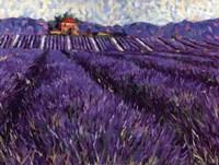Framed Lavender Fields I