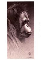 Framed Jo-Jo, the Orangutan