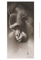 Framed Silver Back, the Gorilla