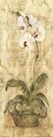 Framed Esprit Phalaenopsis Panel