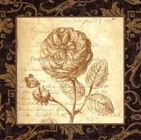 Framed Rose - with a border