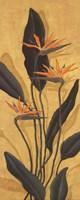 Framed Bird Of Paradise - Mini