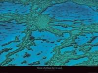 Framed Grande Barriere De Corail