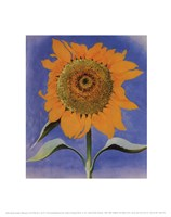 Framed Sunflower, New Mexico, 1935