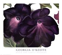 Framed Black and Purple Petunias