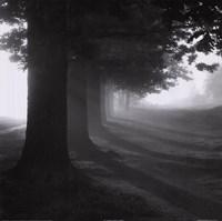 Framed Misty Trees