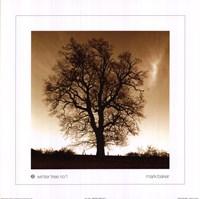 Framed Winter Tree No. 1