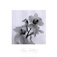 Framed Orchid Spray II