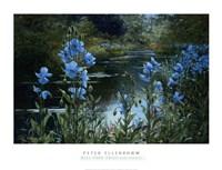 Framed Blue Poppies