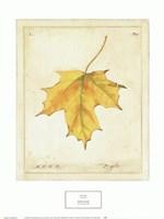 Framed Maple Leaf