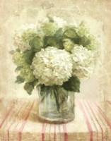 Framed Cottage Hydrangeas in White