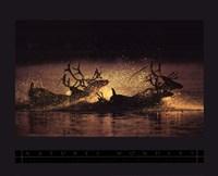 Framed Caribou