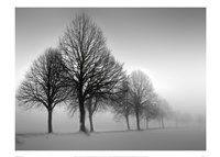 Framed Winter Trees III