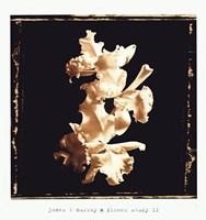 Framed Flower Study II