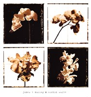 Framed Orchid Suite