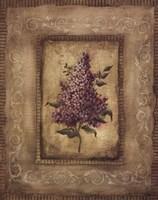 Framed Savin Lilac