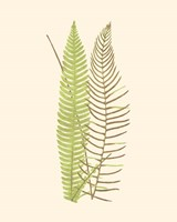 Framed Woodland Ferns V