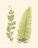 Framed Woodland Ferns VI