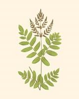 Framed Woodland Ferns VII