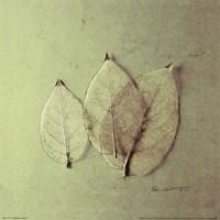 Framed Trio of Skelton Leaves