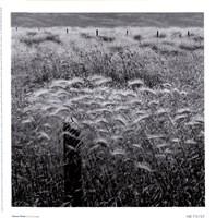 Framed Fence Posts
