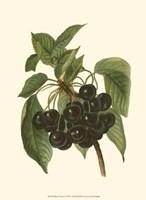 Framed Black Cherries