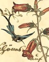 Framed Small Hummingbird Reverie I