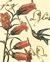Framed Small Hummingbird Reverie II
