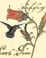 Framed Small Hummingbird Reverie III