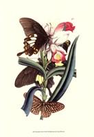 Framed Butterflies and Flora I