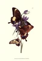 Framed Butterflies and Flora III