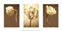 Framed Caramel Blooms