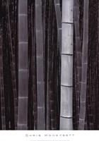 Framed Bamboo #4, Kyoto