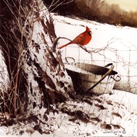 Framed Country Cardinal