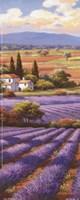 Framed Fields Of Lavender II