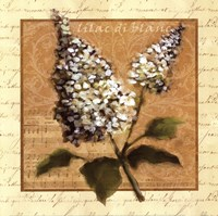 Framed White Lilac Square