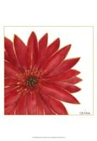Framed Bright Blossoms II