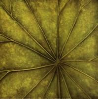 Framed Palm Green