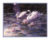 Framed Swans and Bridge