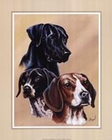 Framed Dog Collage II