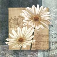 Framed Daisy Field I