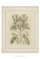 Framed Small Tinted Botanical I (P)