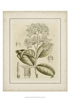Framed Small Tinted Botanical III (P)