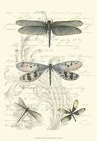 Framed Dragonfly Delight II