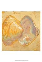Framed Shoreline Shells II