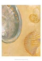 Framed Shoreline Shells V