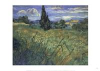Framed Green Wheat Fields