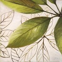Framed Fresh Leaves I